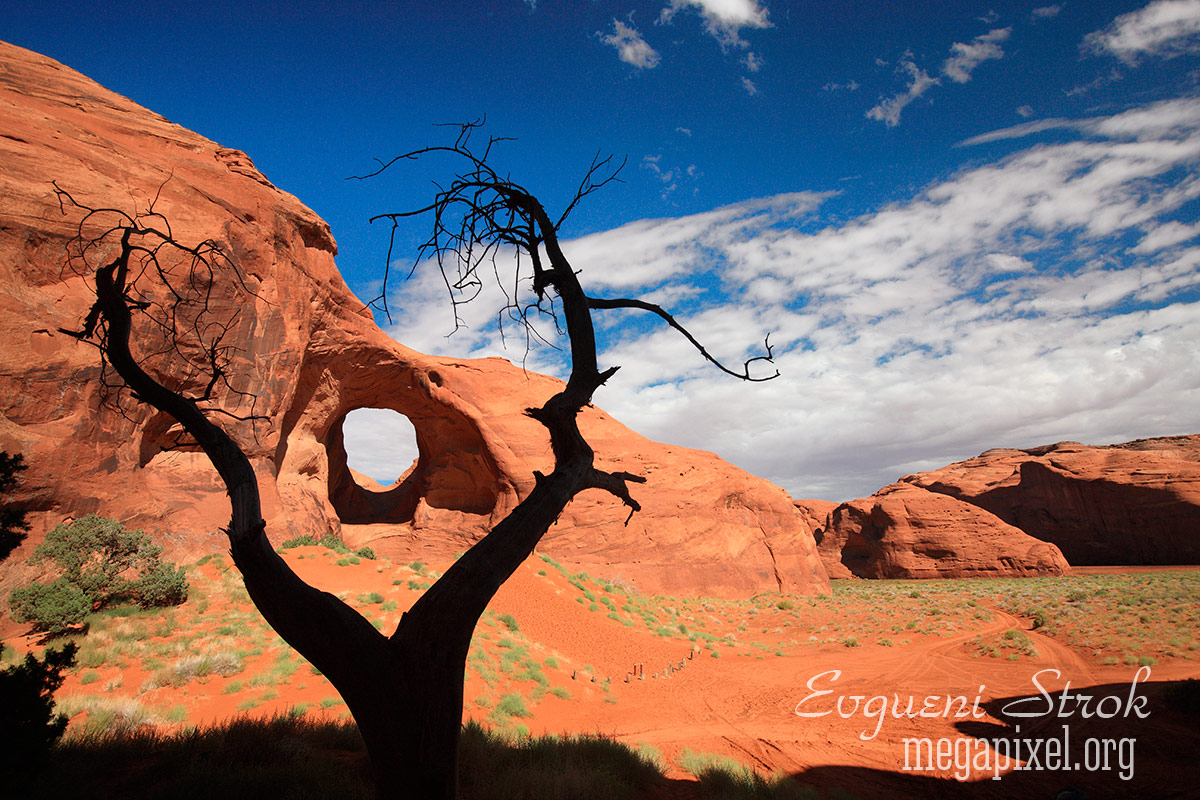 Tree & Arch, Monument Valley , Utah