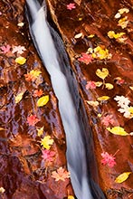 Streams of Autumn, Zion National Park, Utah
